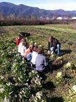 On-farm education